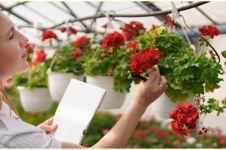 Tips memilih pot gantung tanaman hias, percantik teras rumah