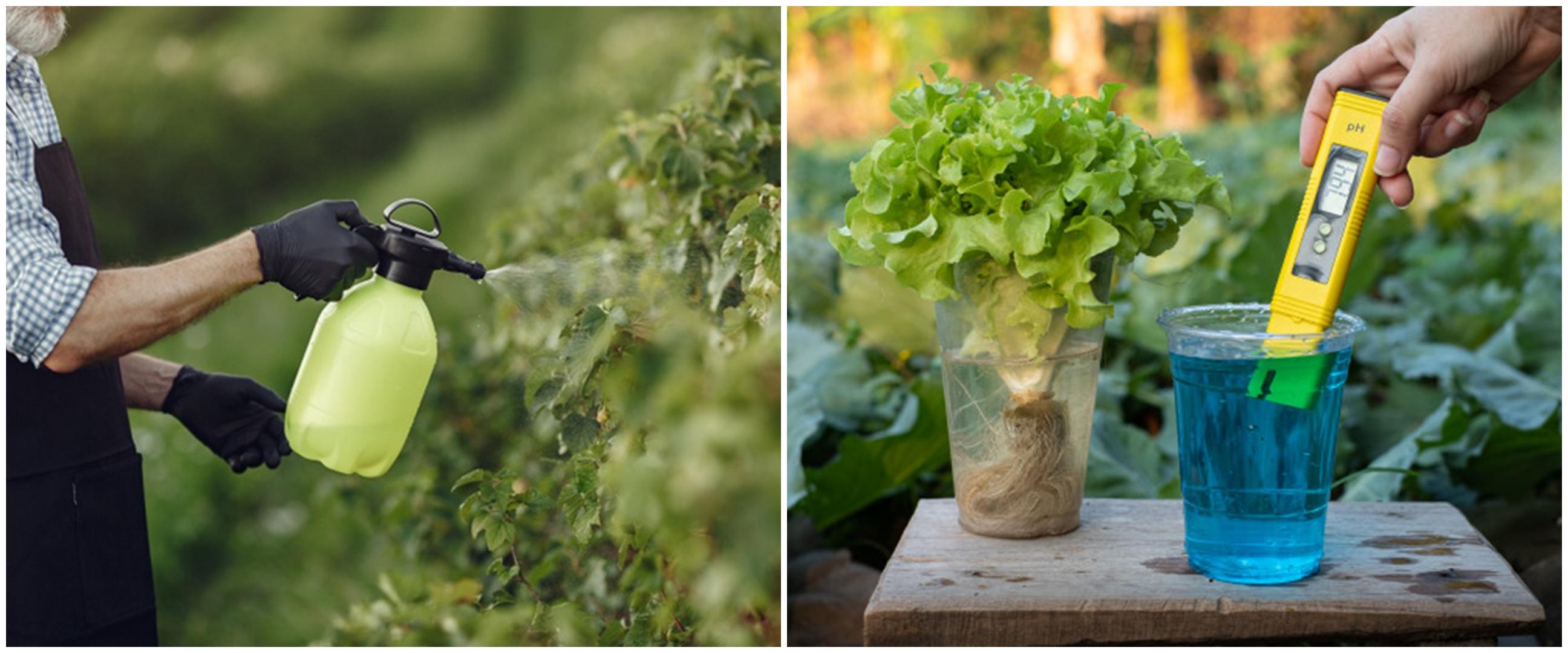 5 Jenis hama yang mengganggu tanaman hidroponik beserta solusinya