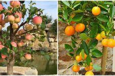 6 Jenis tanaman hias buah, mempercantik pekarangan rumah