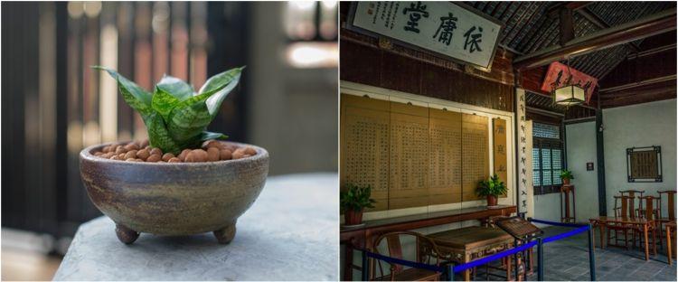 Arti tanaman lidah mertua menurut feng shui, sial atau bawa hoki?