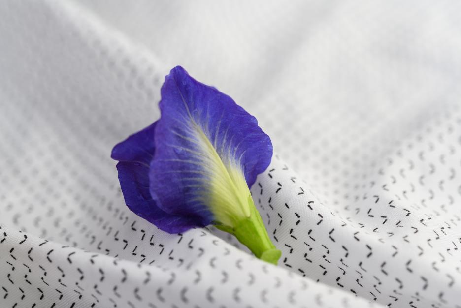Manfaat bunga telang © freepik.com