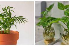9 Tanaman hias tumbuh tanpa sinar matahari, cocok untuk dekorasi rumah