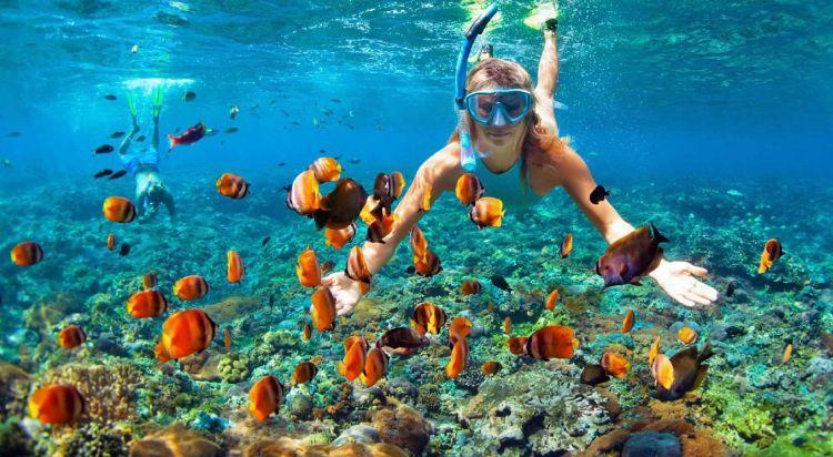 Bingung memilih spot menyelam yang eksotis? Coba klik marketplace ini