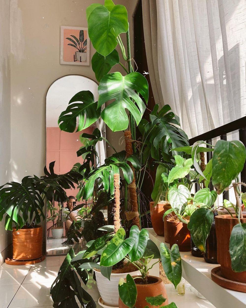 kebun dalam rumah Gilsha © Instagram