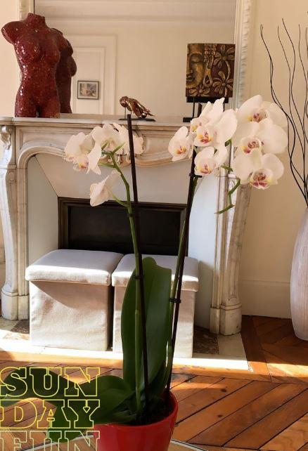 rumah Alyssa Daguise di paris © Instagram