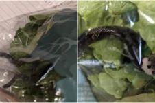 Duh, pembeli ini temukan ular berbisa di dalam plastik sayuran