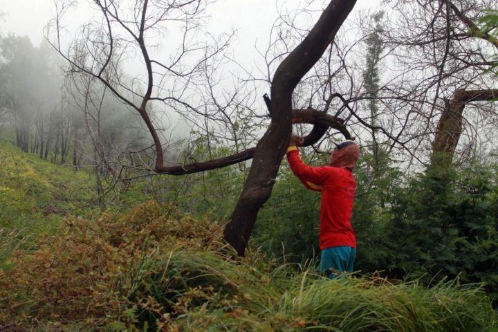 Peringati Hari Bumi 2021, pemerintah serukan pentingnya hutan sosial