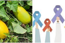 7 Manfaat timun suri bagi kesehatan, bisa cegah kanker