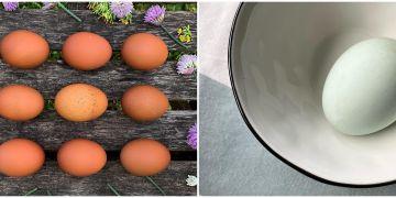 Telur ayam dan bebek, mana yang lebih bernutrisi?
