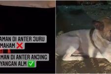 Viral kisah anjing antar peziarah ke makam tuannya, penuh haru