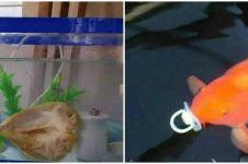 10 Penampakan nyeleneh ikan peliharaan ini bikin bingung lihatnya