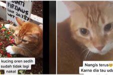 Viral video kucing sedih ditinggal pemilik, termenung di makam