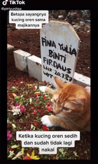 kucing sedih ditnggal pemilik Berbagai sumber