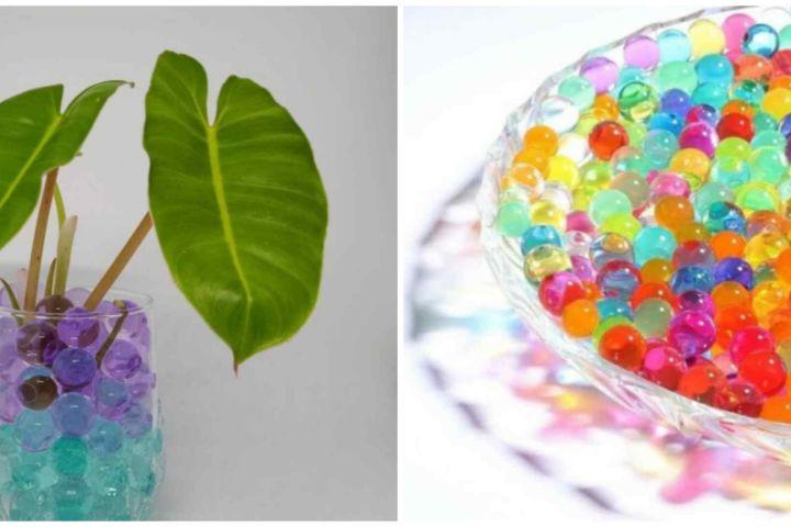 9 Tanaman yang cocok ditanam dengan hidrogel, cantik untuk pajangan
