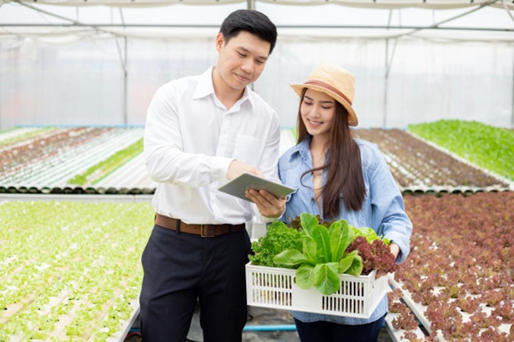 5 Keuntungan belanja sayuran online © 2021 brilio.net