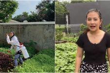 Penampakan kebun sayur di rumah 8 seleb, milik Prilly curi perhatian