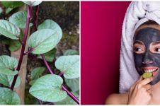 20 Manfaat daun binahong untuk kesehatan dan kecantikan, atasi jerawat