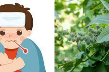 8 Manfaat daun jarak bagi kesehatan, turunkan demam pada anak