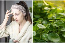 8 Manfaat daun pegagan untuk kecantikan, atasi kerutan hingga jerawat
