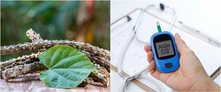 10 Manfaat brotowali untuk kesehatan, dapat mengobati diabetes