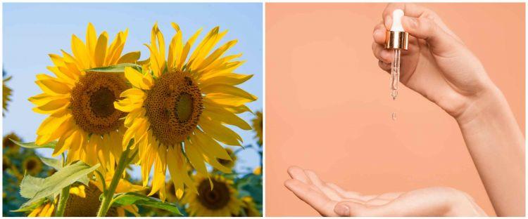 7 Manfaat minyak bunga matahari untuk kecantikan, bisa bikin awet muda