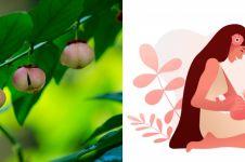 7 Manfaat daun katuk untuk ibu hamil dan menyusui, memperlancar ASI