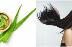 10 Manfaat lidah buaya untuk rambut, mengurangi kerontokan