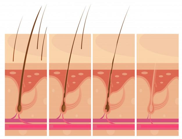 Manfaat lidah buaya untuk rambut freepik.com