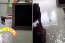 Viral rumah banjir karena kucing buka keran wastafel, bikin heboh