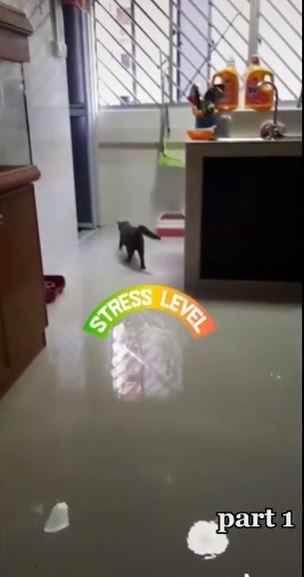 rumah banjir karena kucing Berbagai sumber
