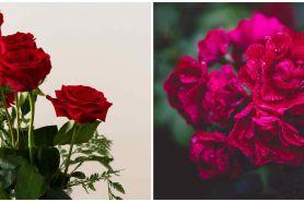 10 Manfaat air mawar untuk kecantikan, ampuh atasi kulit kering