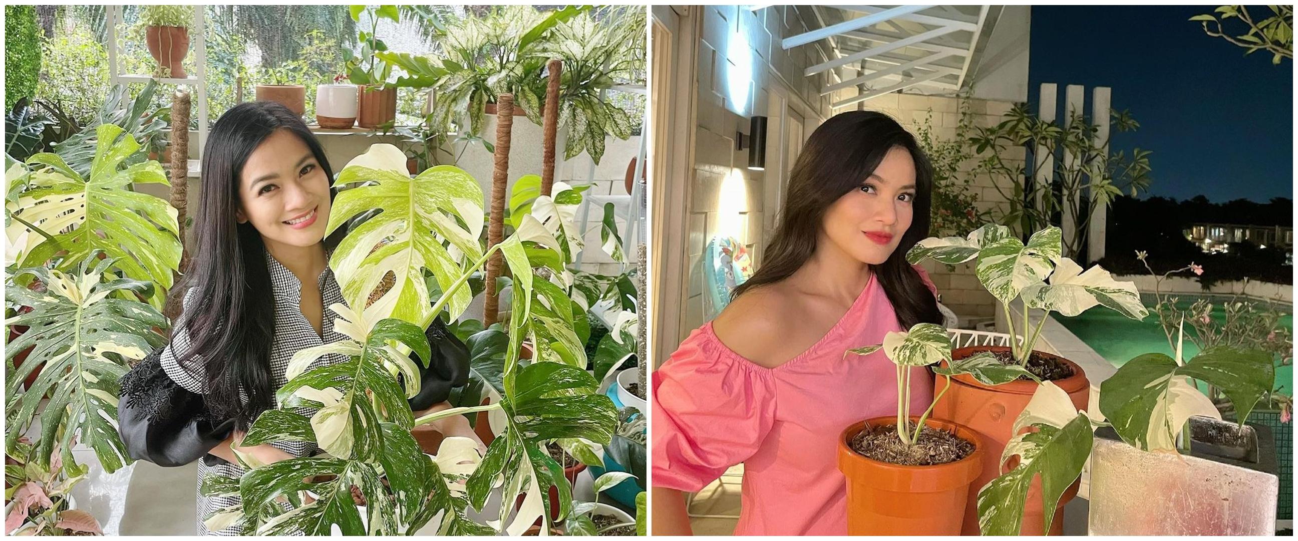 10 Potret kebun di rumah Titi Kamal, koleksi tanamannya bikin takjub