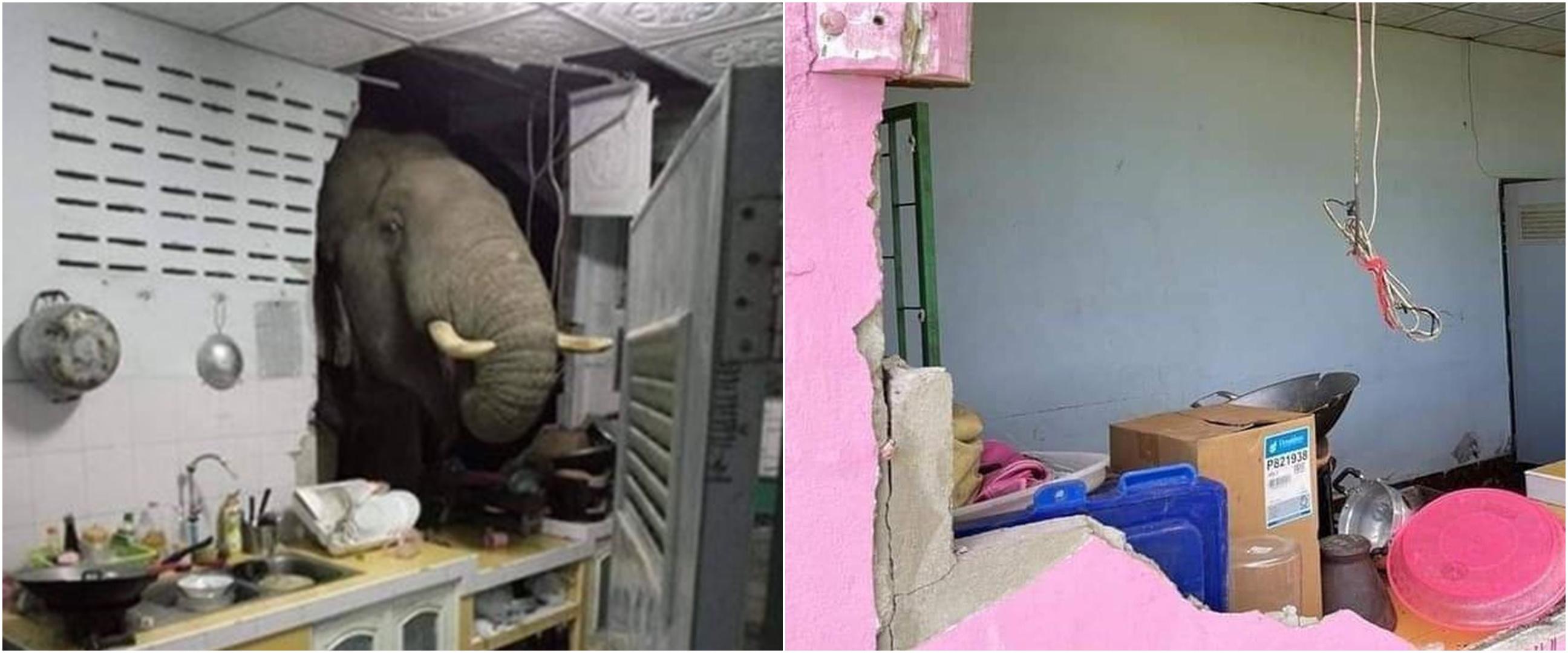 Viral gajah lapar bobol rumah warga, penghuni sampai syok
