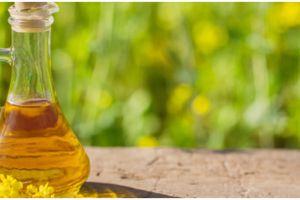 8 Manfaat minyak kanola untuk kesehatan, kontrol kolesterol