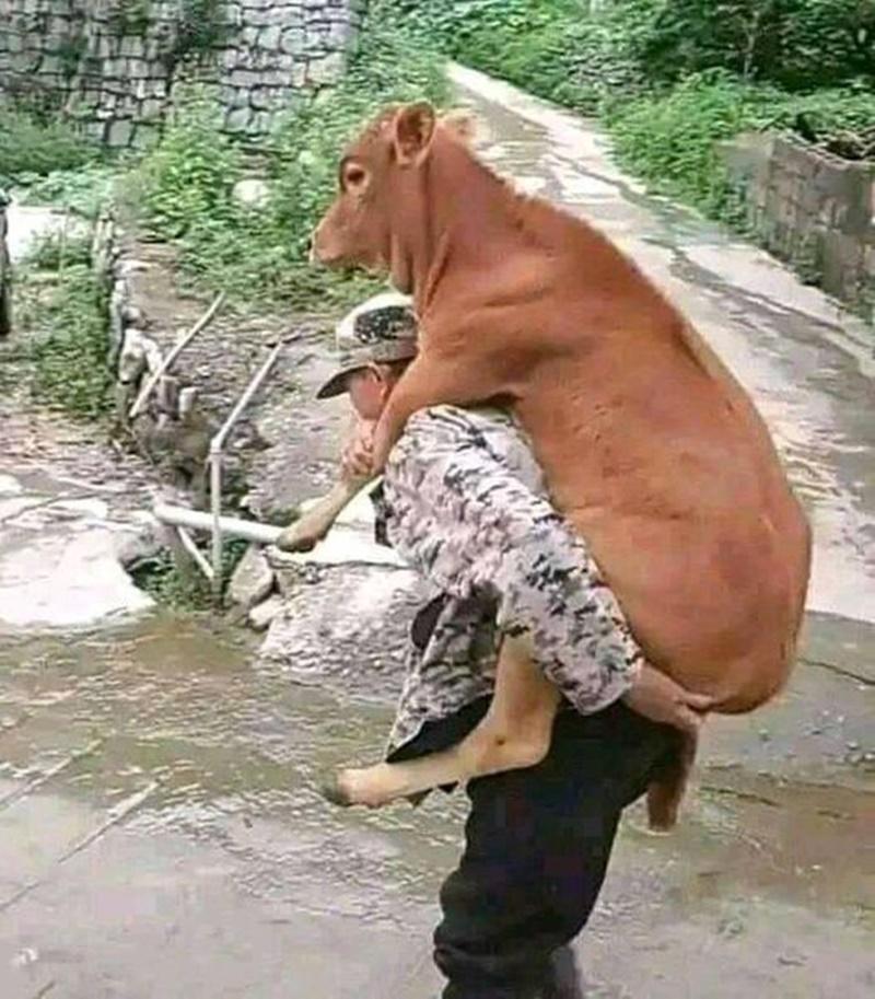 bapak bapak terlalu sayang hewan © 2021 berbagai sumber