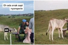 Momen tak terduga prajurit TNI prewedding, tiba-tiba didatangi sapi