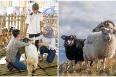 Tata cara menyembelih hewan kurban, beserta doa dan keutamaannya