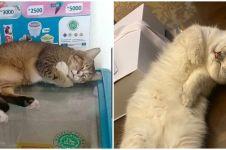 12 Potret lucu kucing lagi tidur ini posenya bikin gemas maksimal