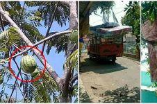 11 Penampakan benda di pohon ini absurdnya bikin lihat dua kali