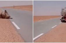 Viral sopir truk beri minum unta kehausan di Gurun Sahara, bikin haru