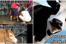 21 Meme lucu 'sapi galau' saat jadi hewan kurban ini bikin ikut baper