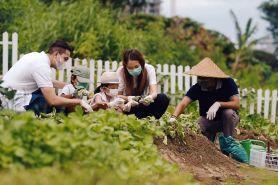 The Westin Surabaya donasi makanan sehat dari hasil kebun sendiri