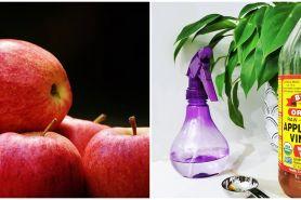 21 Manfaat cuka apel untuk kesehatan dan kecantikan, cegah kolesterol