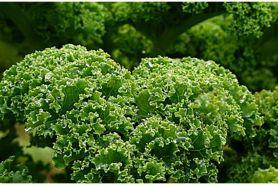 Sering dihindari, 7 sayuran pahit ini punya banyak manfaat