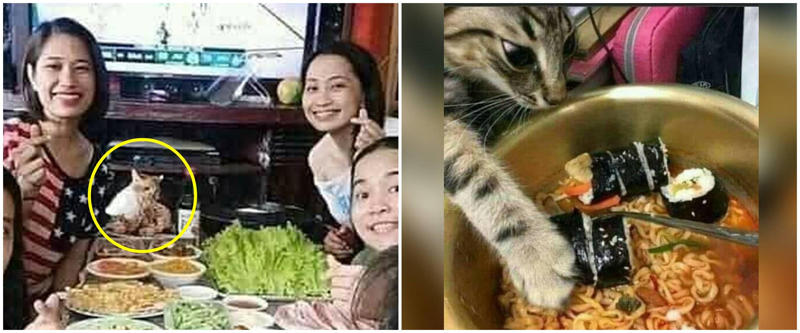 11 Momen lucu kucing mencuri makanan ini bikin ngelus dada