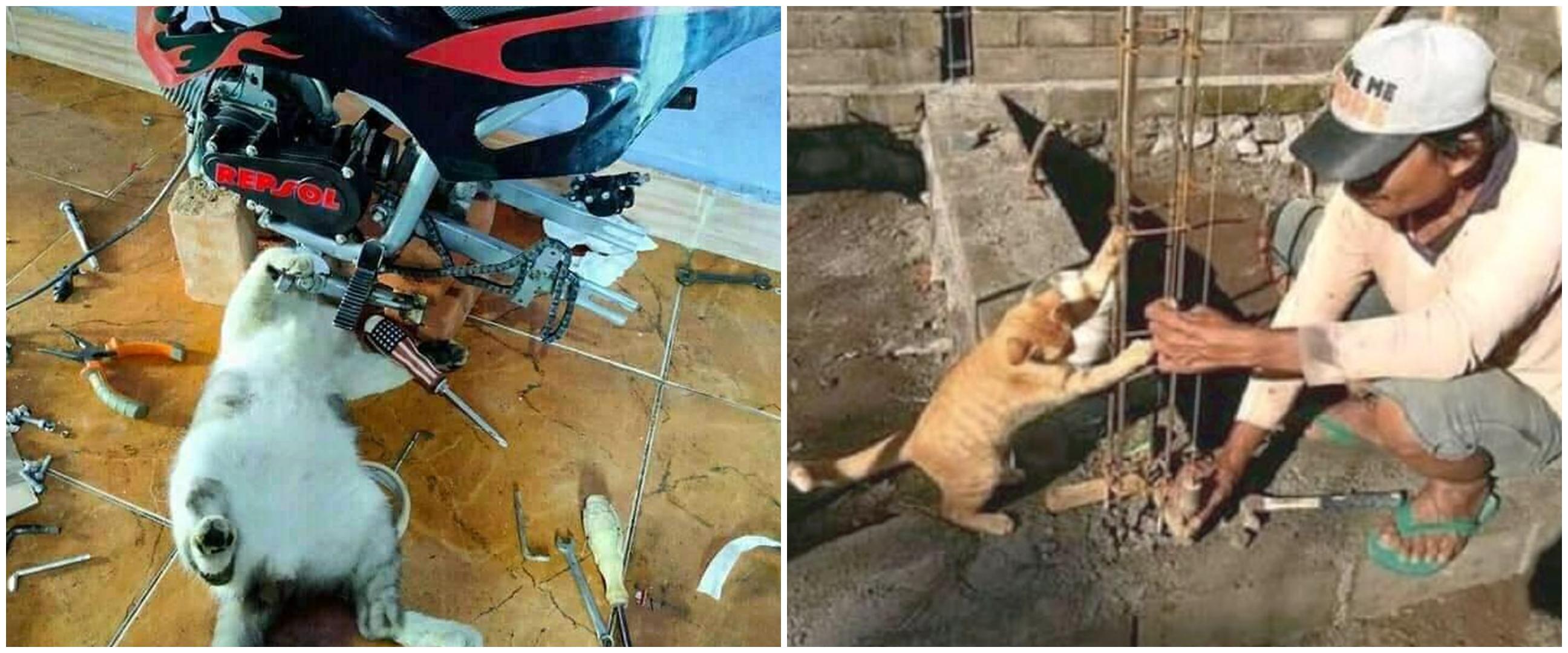 11 Momen lucu kucing dikasih pekerjaan berat, ekspresinya gemesin