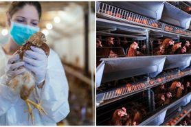 Kasus flu burung muncul kembali di China