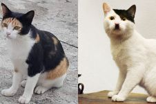 15 Potret lucu corak bulu kucing ini nyelenehnya bikin geleng kepala