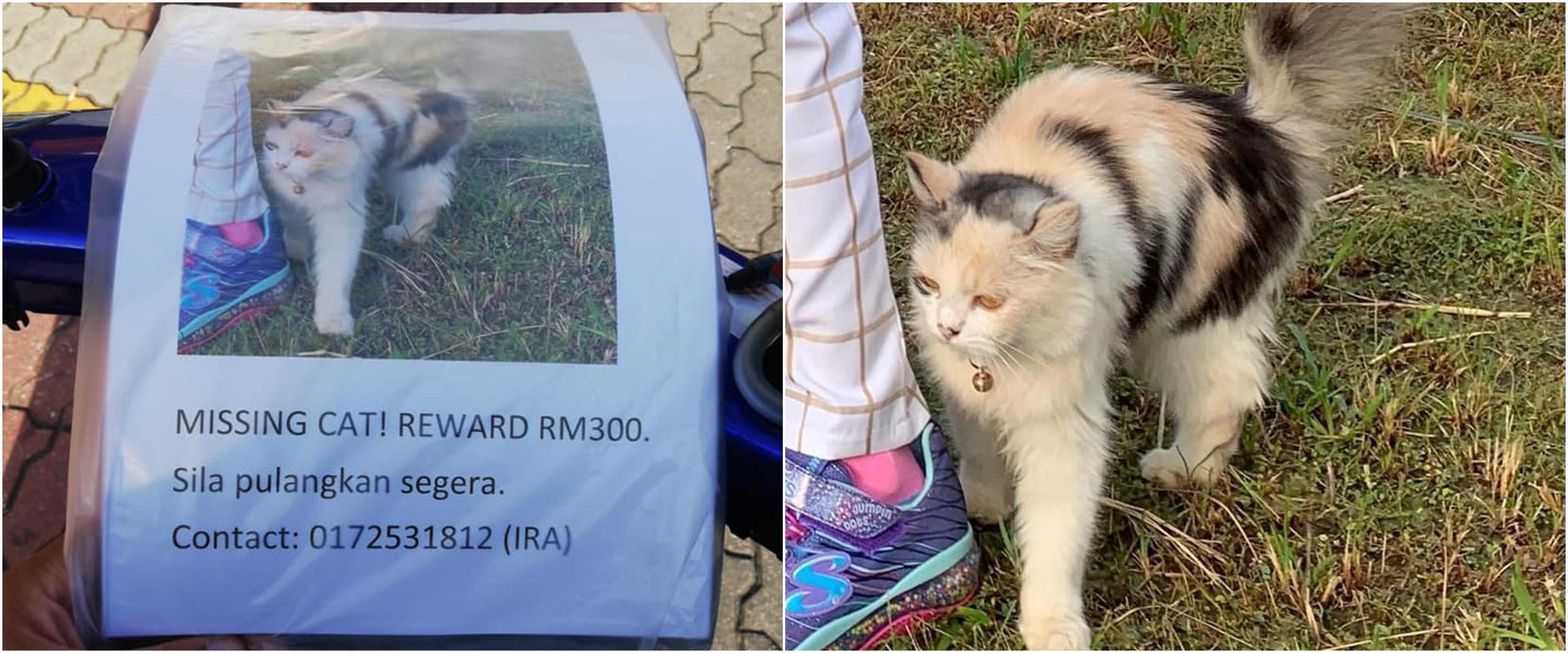 Momen anjing temukan kucing yang hilang, bikin salut sekaligus gemas