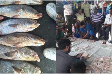Mendadak kaya, nelayan tangkap 157 ikan mahal senilai Rp 2,5 miliar